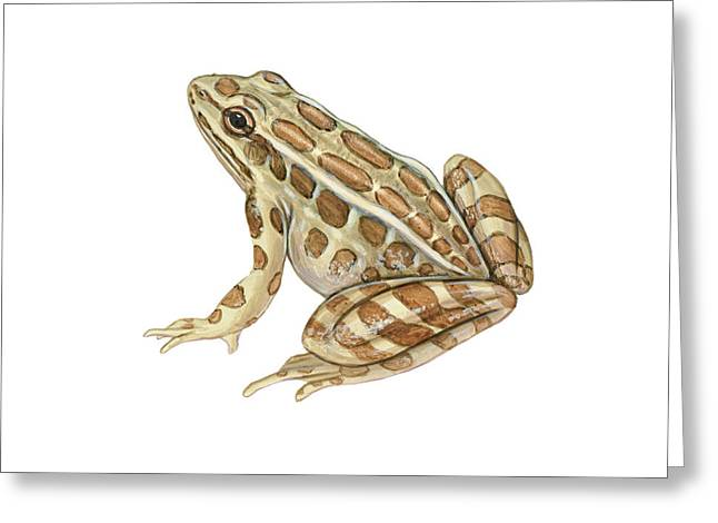 Pickerel Greeting Cards - Pickerel Frog Greeting Card by Carlyn Iverson