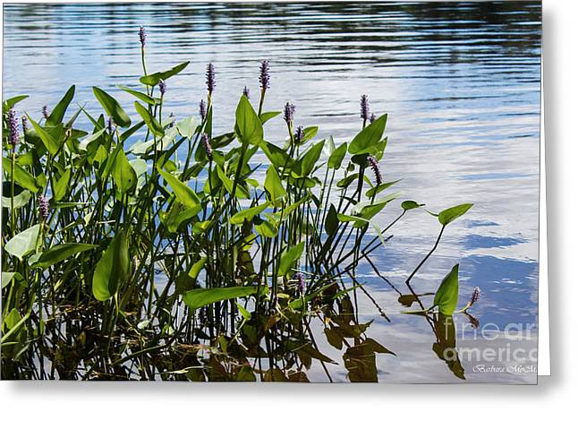 Pickerel Greeting Cards - Pickerel Weed Greeting Card by Barbara McMahon