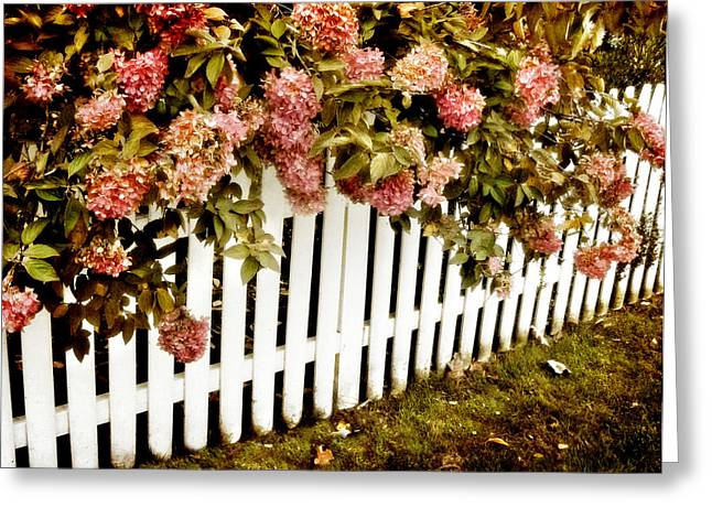 Vines Greeting Cards - Picket Fence Greeting Card by Jessica Jenney