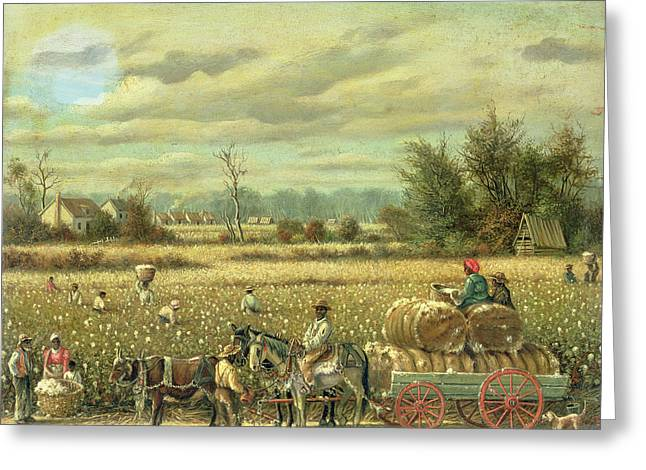 Picking Cotton Greeting Card by William Aiken Walker