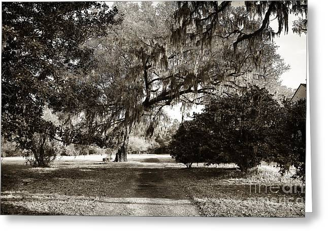 Historic Site Greeting Cards - Pickneys Path Greeting Card by John Rizzuto