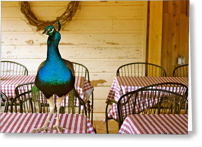 Restaurant On Top Greeting Cards - Picnic Peacock Greeting Card by Tabitha Williams