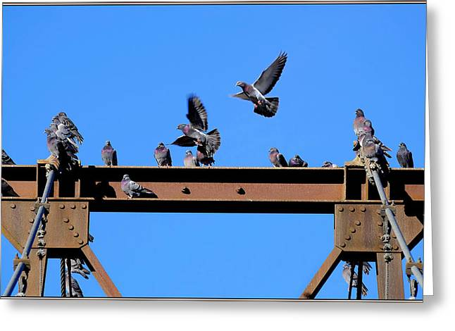 Art In Acrylic Greeting Cards - Picture Of Pigeons Greeting Card by Constance Lowery