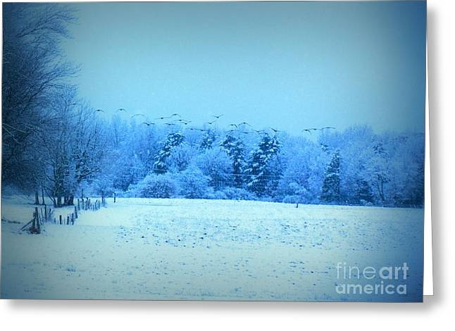Maine Farms Greeting Cards - Picture Perfect Landing Greeting Card by Elizabeth Dow