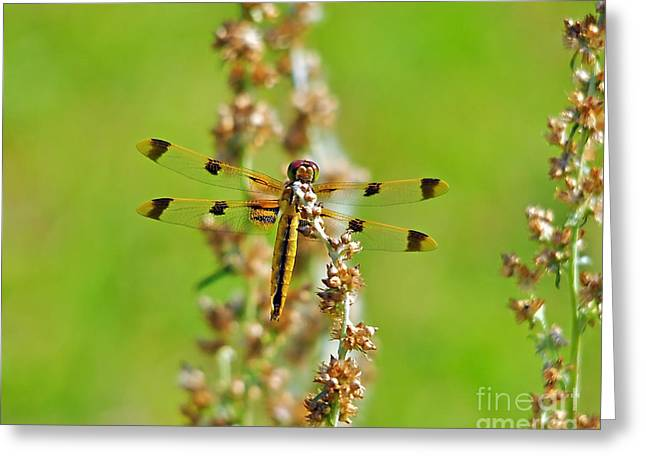 Dragon Fly Photo Greeting Cards - Picturesque Painted Greeting Card by Al Powell Photography USA