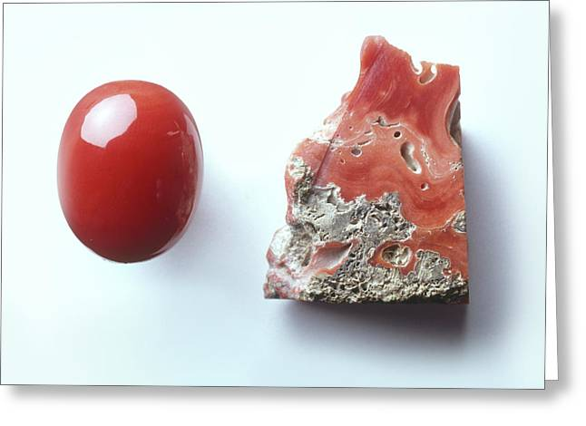 Piece Of Red Coral And Red Coral Cabochon Greeting Card by Dorling Kindersley/uig