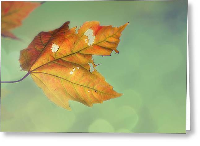 Autumn Prints Photographs Greeting Cards - Pieces of Me Greeting Card by Amy Tyler