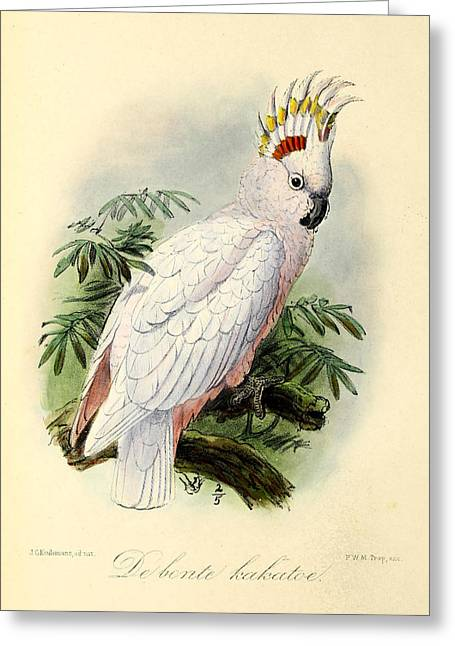 Pie Greeting Cards - Pied Cockatoo Greeting Card by J G Keulemans
