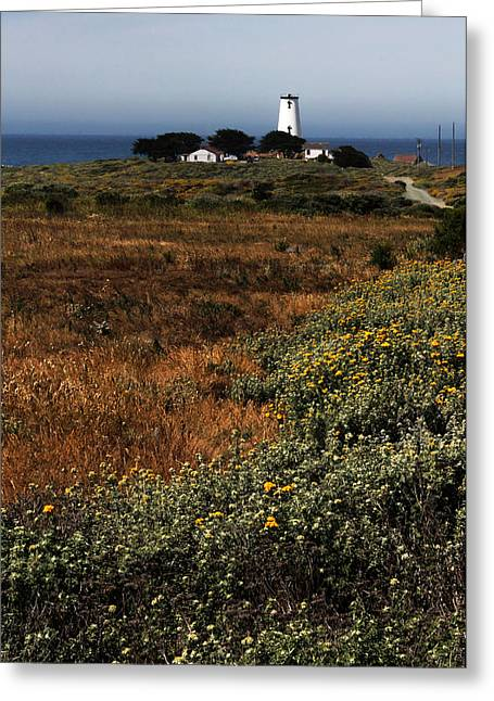 Cambria Greeting Cards - Piedras Blancas Lighthouse Greeting Card by Judy Vincent
