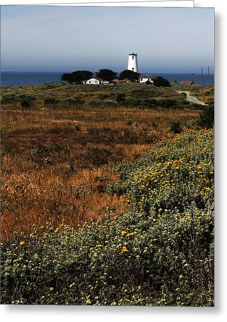 Piedras Blancas Lighthouse Greeting Card by Judy Vincent