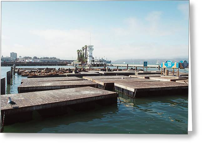 Pier 39 Greeting Cards - Pier 39 Greeting Card by Nastasia Cook