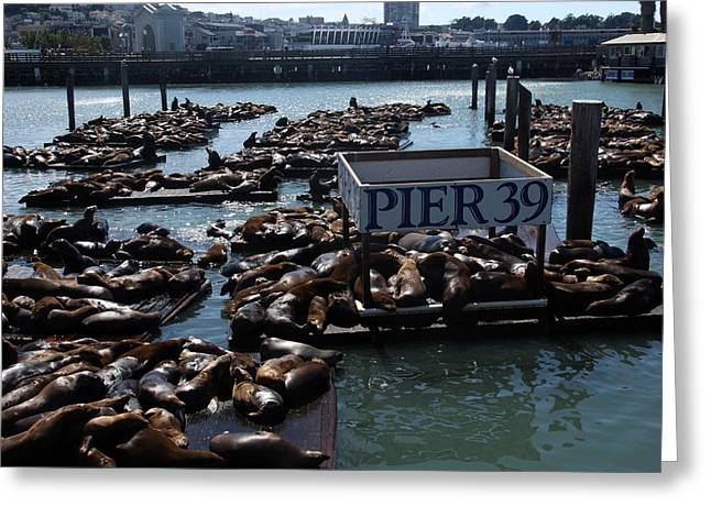 Recently Sold -  - Sea Lions Greeting Cards - Pier 39 San Francisco Bay Greeting Card by Aidan Moran