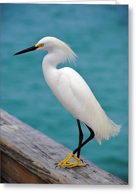 Wood Pier Framed Prints Greeting Cards - Pier Bird Greeting Card by John Hintz