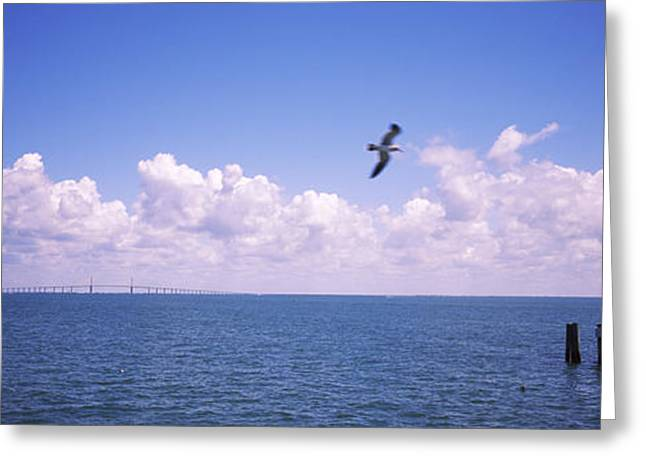 Ripples In The Water Greeting Cards - Pier Over The Sea, Fort De Soto Park Greeting Card by Panoramic Images
