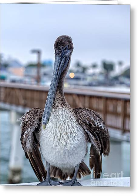 Amusements Greeting Cards - Pier Pelican Greeting Card by Edward Fielding