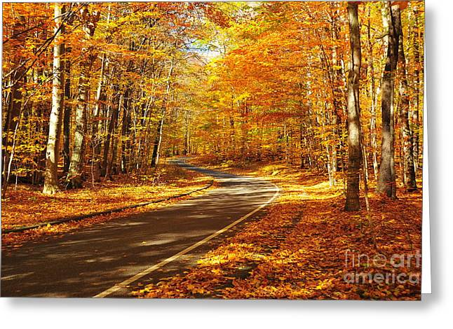 Autumn Trees Greeting Cards - Pierce Stocking Scenic Drive  Greeting Card by Terri Gostola