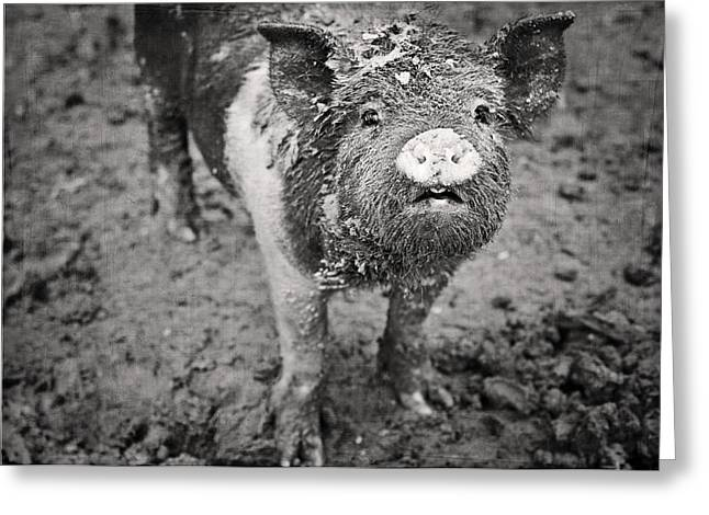 Black Pig Greeting Cards - Pig Greeting Card by Jessie Gould