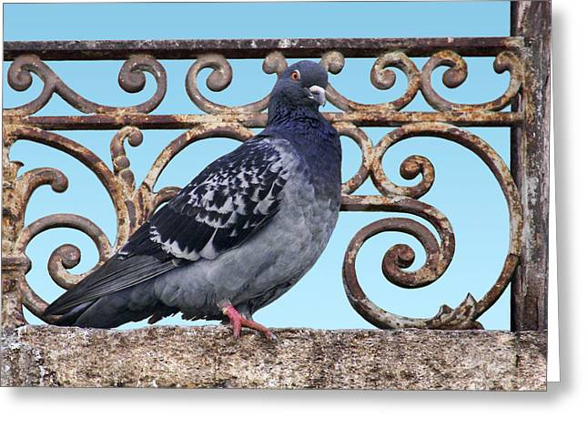Feral Pigeon Greeting Cards - Pigeon and Grill Greeting Card by Nikolyn McDonald