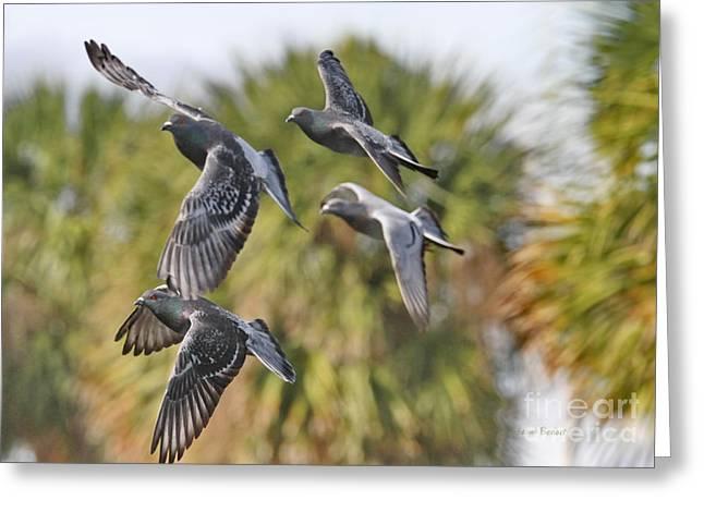 Pigeon Brigade Greeting Card by Deborah Benoit