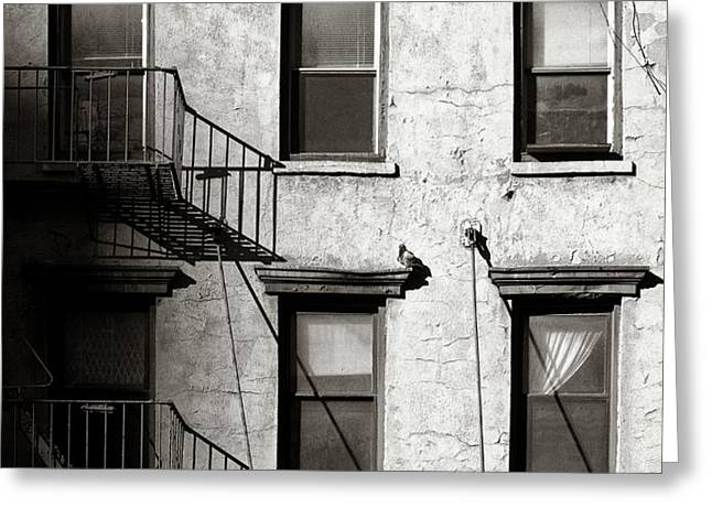 Pigeon Greeting Card by Dave Bowman