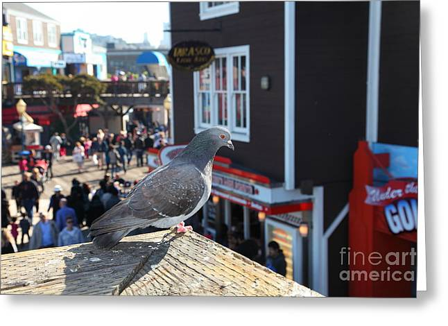 Sight Seeing San Francisco Greeting Cards - Pigeon Enjoying Pier 39 In San Francisco California 5D26131 Greeting Card by Wingsdomain Art and Photography