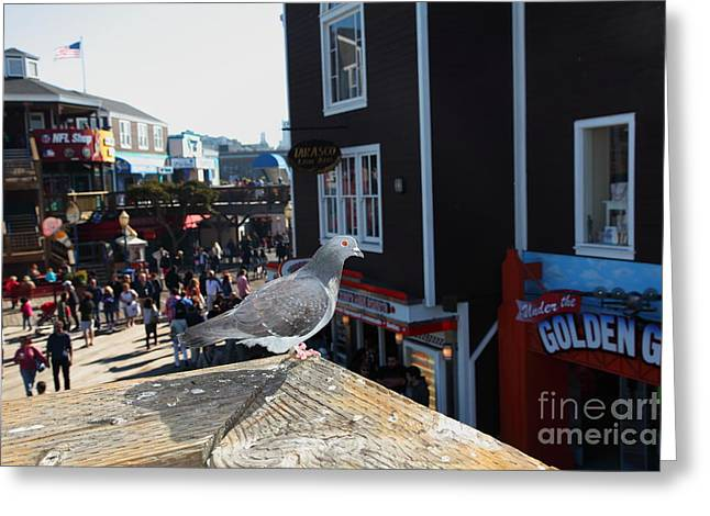 Sight Seeing San Francisco Greeting Cards - Pigeon Enjoying Pier 39 In San Francisco California 5D26132 Greeting Card by Wingsdomain Art and Photography