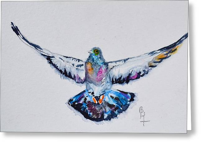 Bht Greeting Cards - Pigeon In Flight Greeting Card by Beverley Harper Tinsley