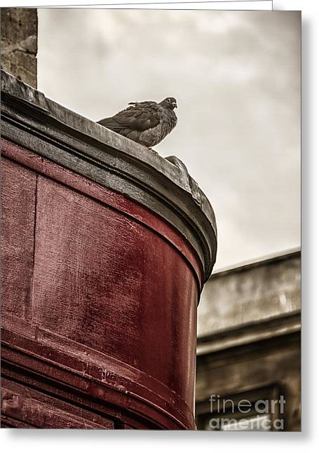 Overhang Greeting Cards - Pigeon Greeting Card by Margie Hurwich