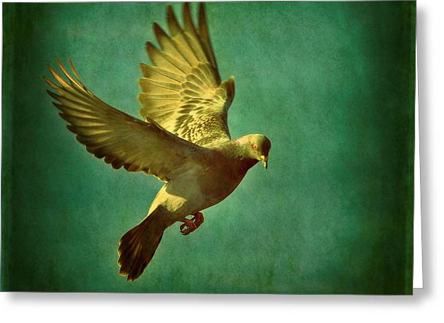 Feral Pigeon Greeting Cards - Pigeon Mating Flight Greeting Card by Von McKnelly