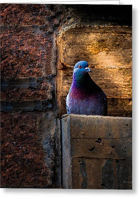 Meditate Greeting Cards - Pigeon of the City Greeting Card by Bob Orsillo