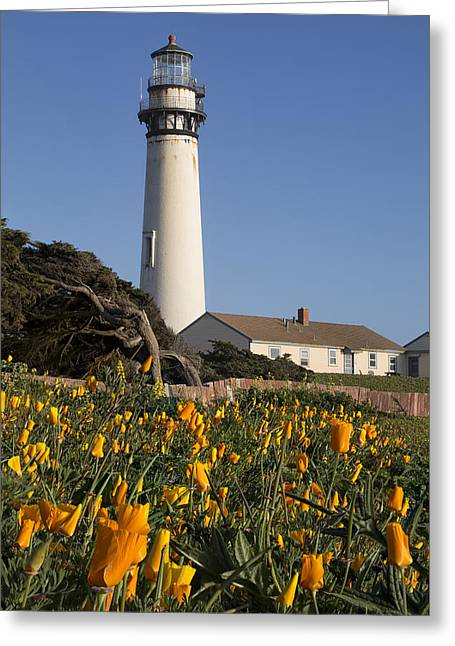 Pigeon Point Lighthouse And California Poppies Greeting Card by Adam Romanowicz