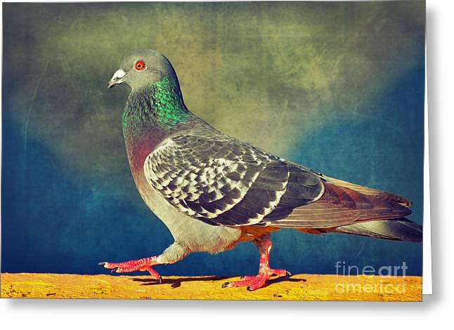Feral Pigeon Greeting Cards - Pigeon Walk Greeting Card by Von McKnelly