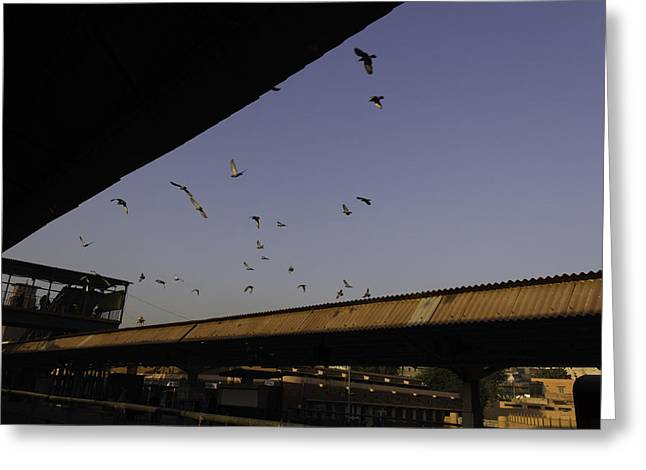 Passenger Train On Bridge. Greeting Cards - Pigeons flying over the Jodhpur train station Greeting Card by Ashish Agarwal