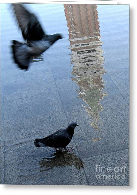 Flooding Photographs Greeting Cards - 	Pigeons in Piazza San Marco. Venice. Italy. Greeting Card by Bernard Jaubert