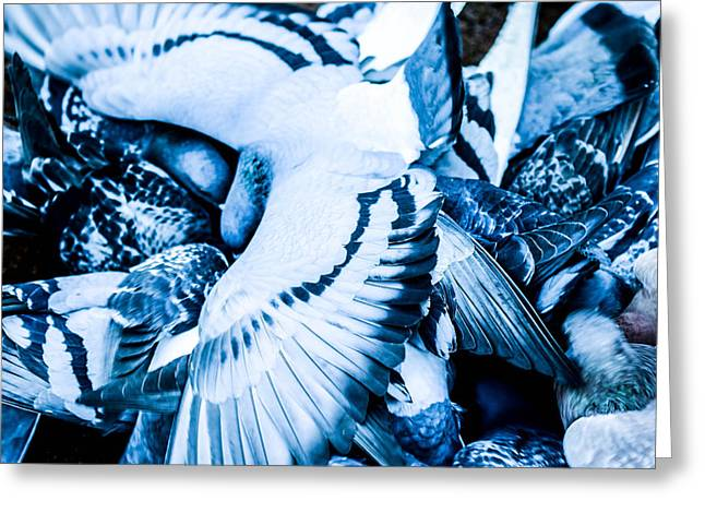 Sea Animals Mixed Media Greeting Cards - Pigeons life Greeting Card by Toppart Sweden