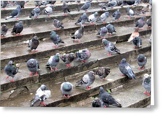 Michael Fitzpatrick Greeting Cards - Pigeons Greeting Card by Michael Fitzpatrick