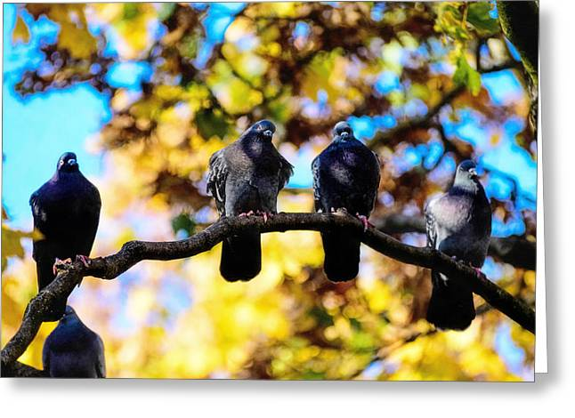 Swarm Greeting Cards - Pigeons taking a brake Greeting Card by Toppart Sweden