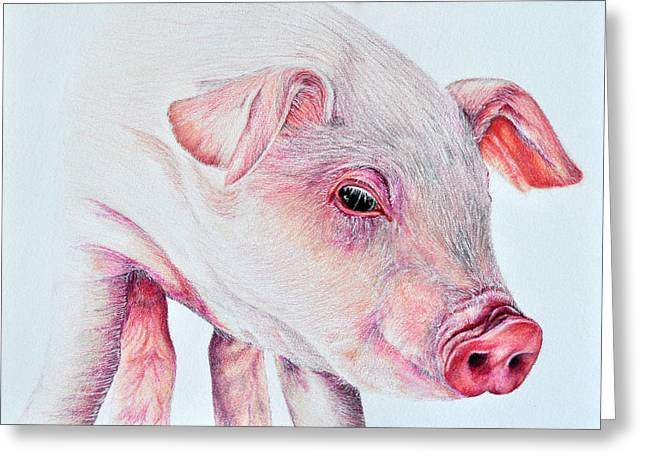 Hyper-realism Greeting Cards - Piggy Greeting Card by Stefan Peters
