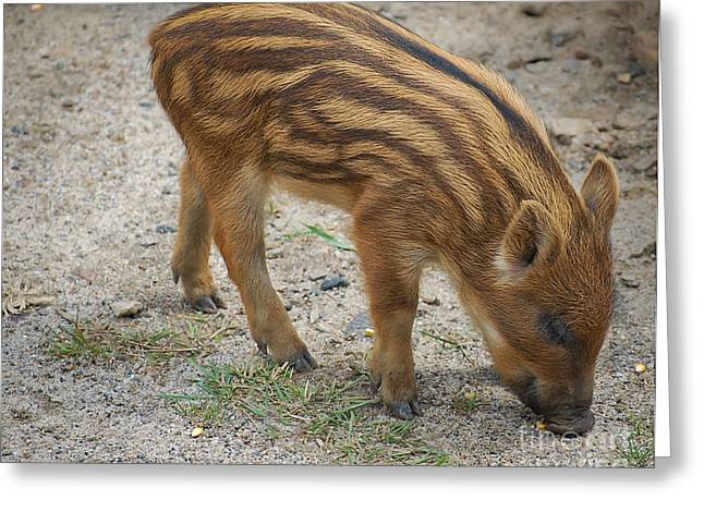 Piglets Greeting Cards - Piglet Greeting Card by Bianca Nadeau