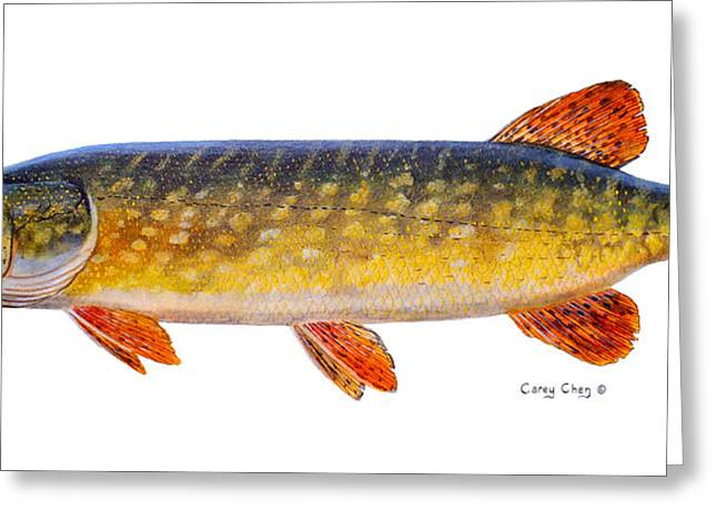 Speckled Trout Greeting Cards - Pike Greeting Card by Carey Chen