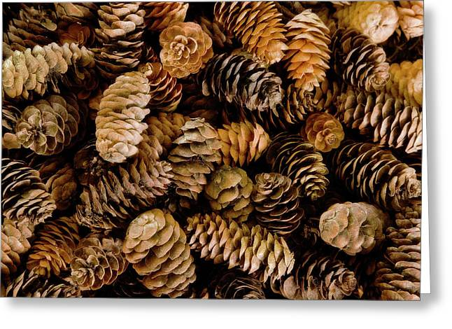 Pile Of Female Pine Cones Greeting Card by Jaynes Gallery