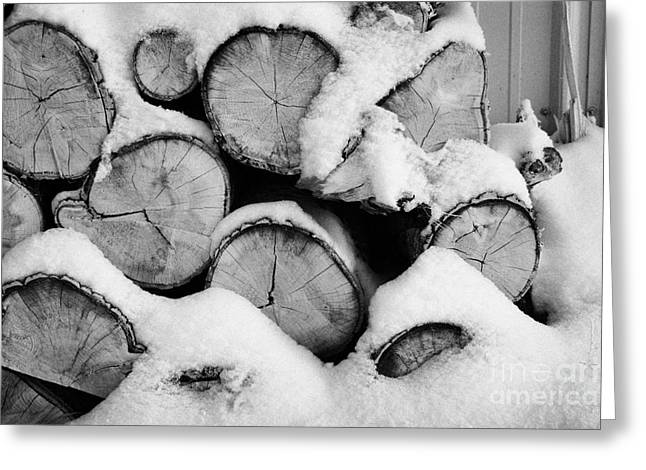 Wintry Greeting Cards - pile of logs covered in snow in Forget Saskatchewan Canada Greeting Card by Joe Fox