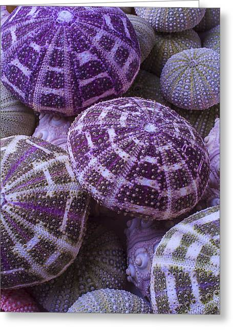 Assorted Greeting Cards - Pile Of Sea Urchins Greeting Card by Garry Gay