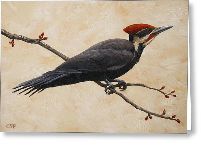 Pileated Woodpeckers Greeting Cards - Pileated Woodpecker Greeting Card by Crista Forest
