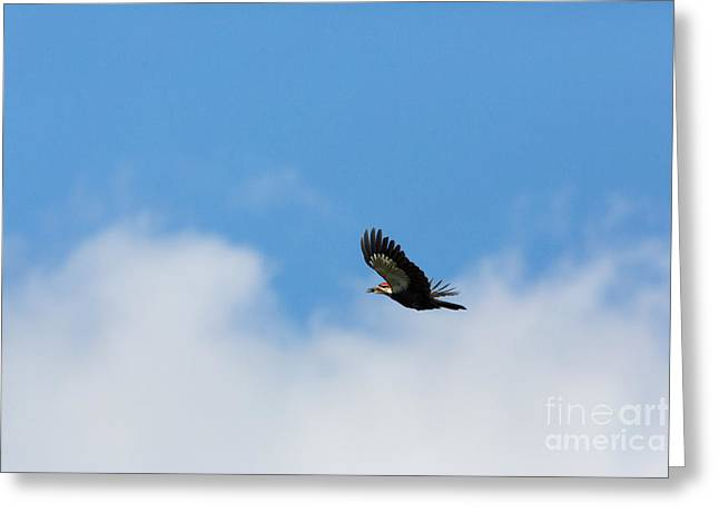 Animalia Greeting Cards - Pileated Woodpecker Dryocopus Pileatus Greeting Card by Linda Freshwaters Arndt