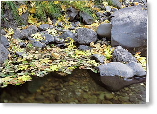 Pilot Creek In Autumn, Humboldt County Greeting Card by Panoramic Images