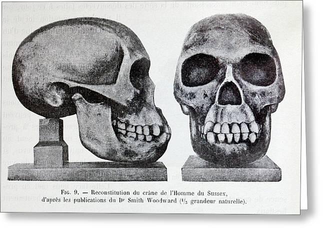 Piltdown Man Skull Reconstruction Greeting Card by Paul D Stewart