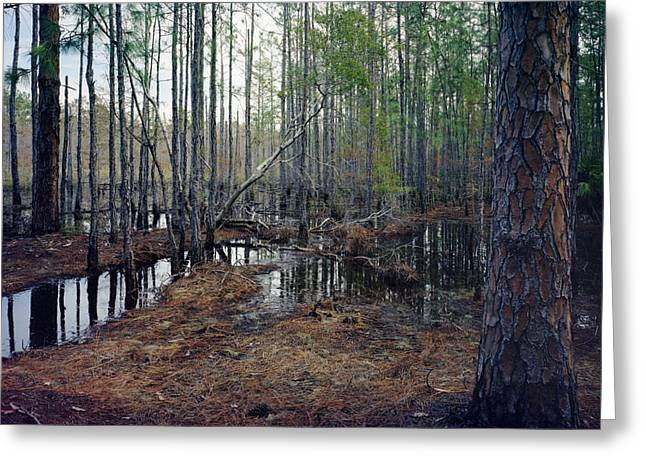 Chris Kusik Greeting Cards - Pine and Water. Split Oak Forest. Greeting Card by Chris  Kusik