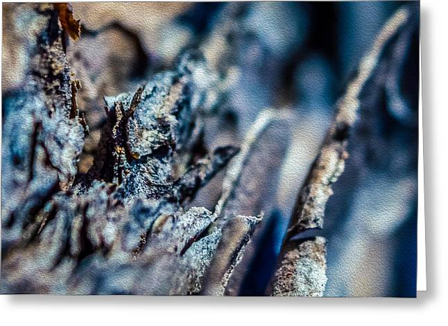 Sesquicentennial Greeting Cards - Pine Bark Abstract Greeting Card by Rob Sellers