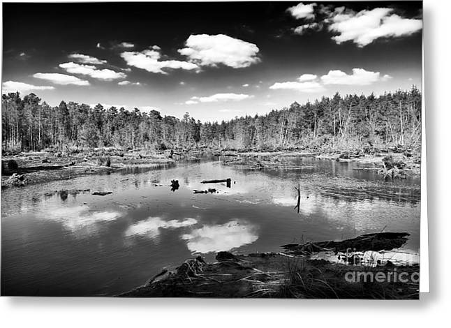 New Jersey Pine Barrens Greeting Cards - Pine Barrens Lake Greeting Card by John Rizzuto